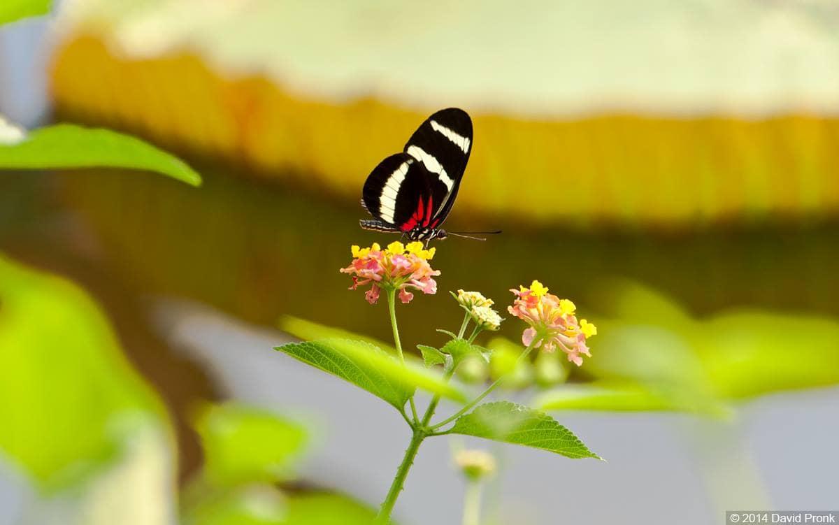 Genieten van prachtige vlinders in vlindertuin Amazonica van Diergaarde Blijdorp / Rotterdam Zoo.